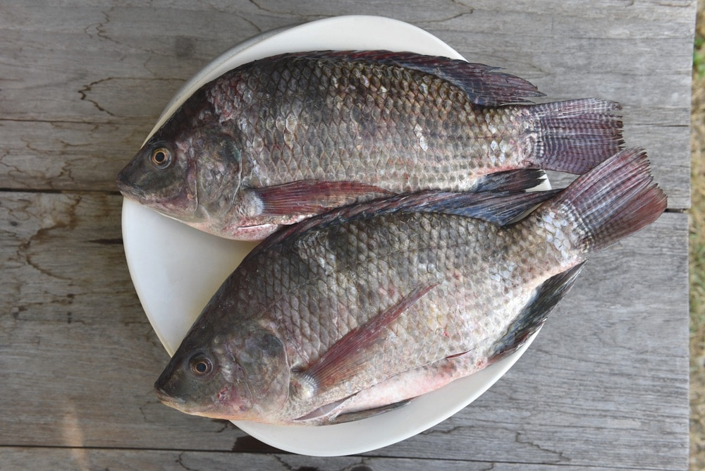 What does Tilapia Taste Like